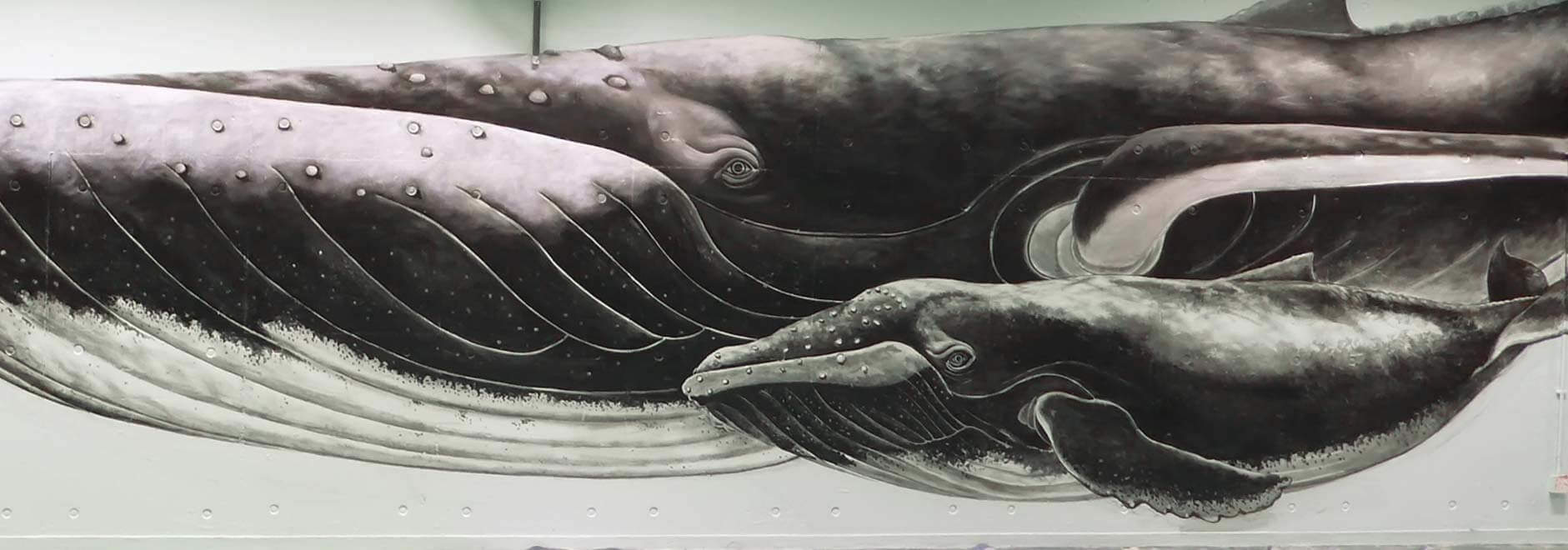"""Mural """"underwater world"""" Wall Art Painting For Alpha Mural Artist In School Project"""