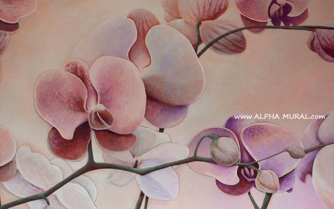 Phalaenopsis (蝴蝶蘭)